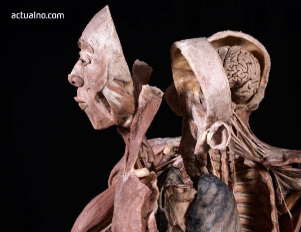 photo of Удивителна образователна изложба с истински човешки тела гостува в София от 14 април до 30 май
