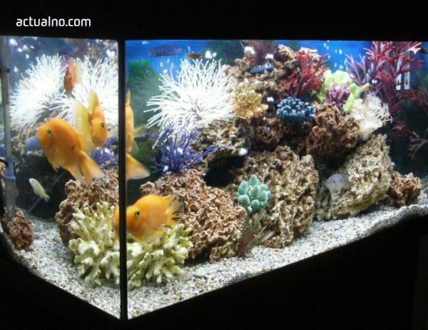 photo of Хакери проникнали в базата данни на казино през акваруима за рибки