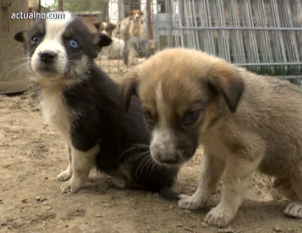 photo of Ефективна ли е безплатната кастрация на бездомните животни?