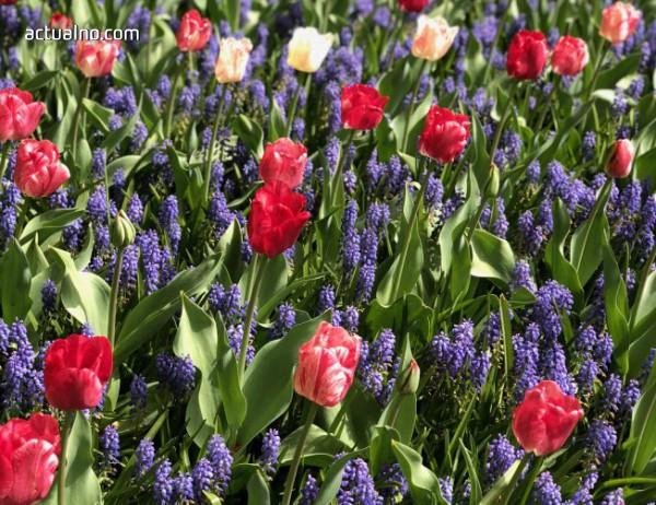 photo of Паркът на цвета и на пролетта (ВИДЕО)