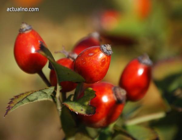 photo of 3 причини маслото от шипкови семена да бъде отговорът на вашата молитва за кожа на супер модел