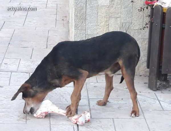 photo of Областният управител на Смолян: Проблемът с кучетата трябва да се изнесе на регионално ниво