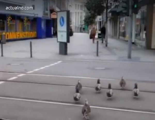 photo of В Германия патките пресичат на зелено (ВИДЕО)