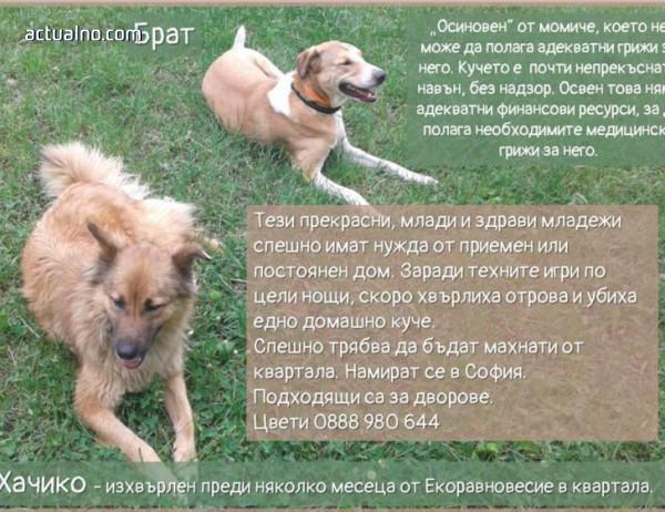 photo of Желанието на едно момиче за рождения ѝ ден - да намери дом за тези кучета