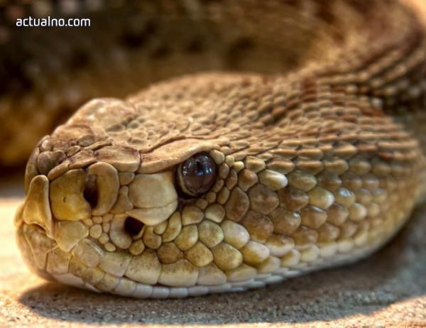 photo of Змия с отрязана глава за малко не уби мъж (ВИДЕО)