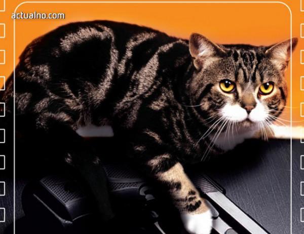 photo of Не е препоръчително да се обиждат котки
