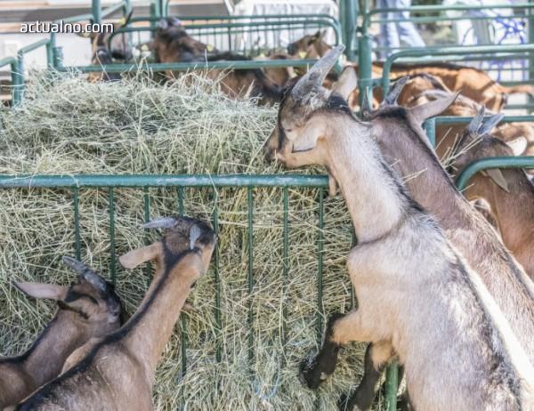 photo of Нов протест на животновъдите в Ямболско