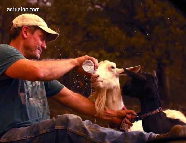 photo of Тъпата държава, в която две кози са повече от един човек
