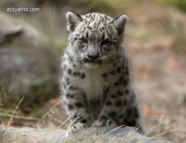 photo of В Приморие бе открит нов вид леопард