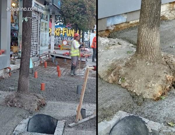 """photo of Унищожават дървета по """"Граф Игнатиев"""", бетонирайки ги"""