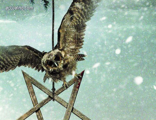 "photo of ""Совата"" от Самюел Бьорк винаги ловува през нощта"