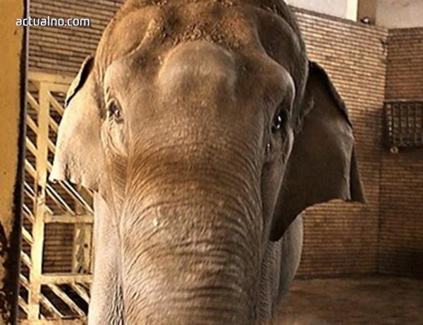 Търси се мини багер за единствения слон в Софийския зоопарк (ВИДЕО)